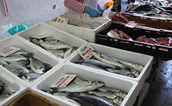 Gruz fish market (photo by hooger85 /Flickr)
